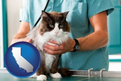 california a veterinarian and a cat
