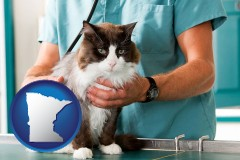 minnesota a veterinarian and a cat