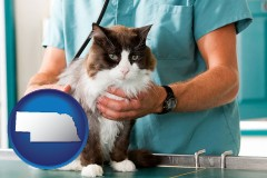 nebraska a veterinarian and a cat