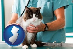 new-jersey a veterinarian and a cat