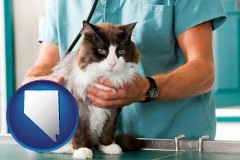 nevada a veterinarian and a cat