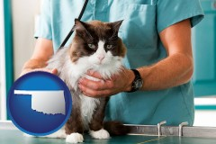 oklahoma a veterinarian and a cat
