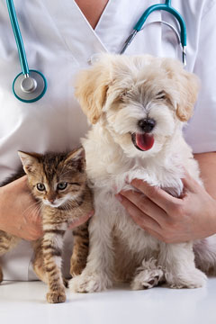 veterinarian with a kitten and a puppy